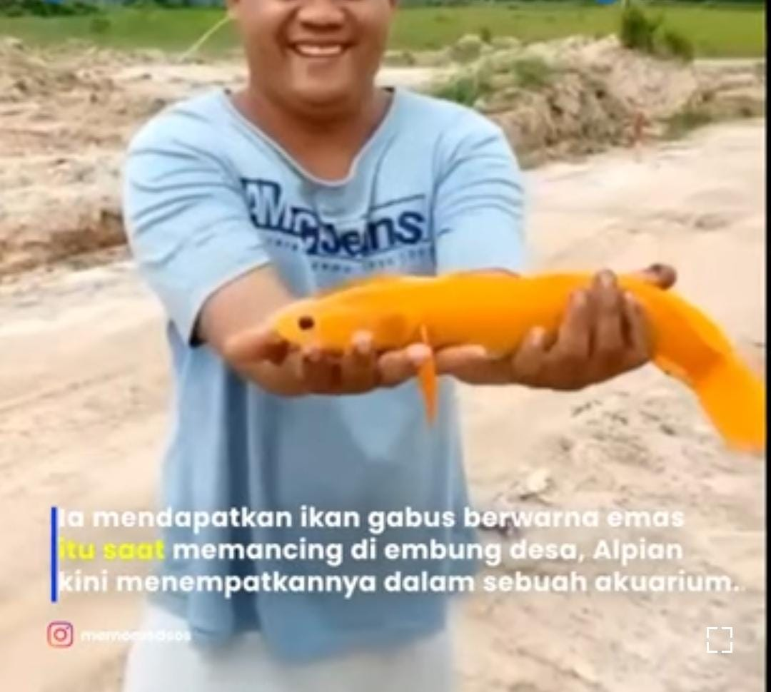 TamanPendidikan.com